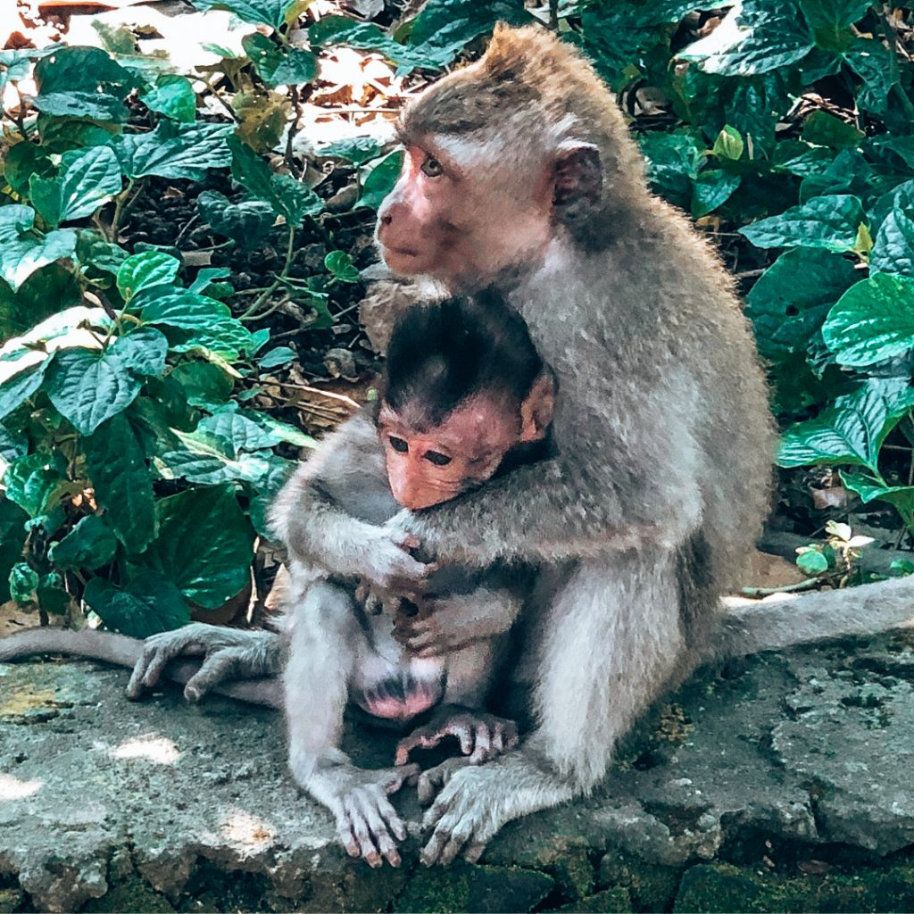 Seeing all the monkeys along on the Uluwatu beaches in Bali!